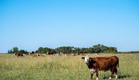 Darle un mejor uso a las pasturas garantiza más leche y menos contaminación